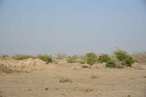 Veer Thari Site
